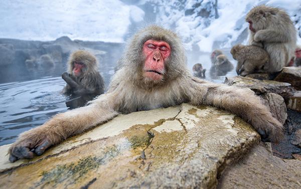4月26日は「よい風呂の日」 正しい入浴で巡りのよい体づくり