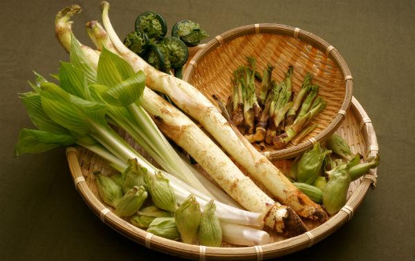 春の味覚うどとたらの芽、天ぷら以外の美味しい食べ方