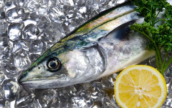 今が旬の春のお魚、サワラ(鰆) 料亭風アレンジで食べてみて
