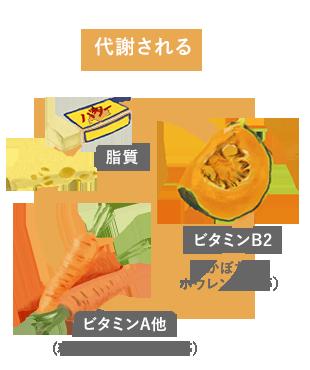 脂質、ビタミンB2、ビタミンA他