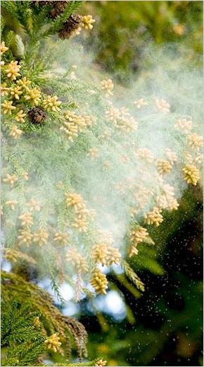 食事でできる花粉対策