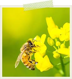 ハチの写真