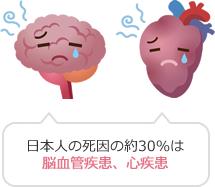 脳・心臓のイラスト