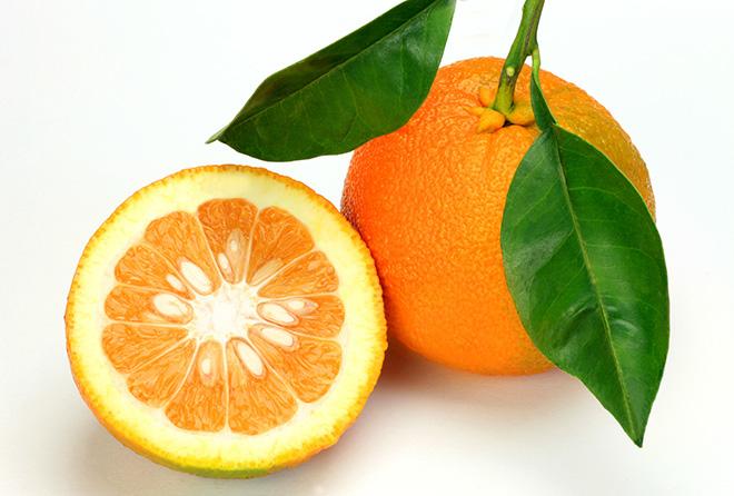 皮の厚いオレンジ