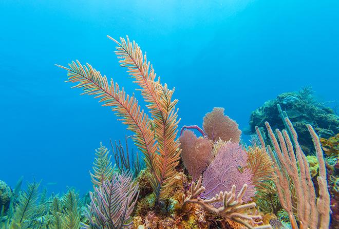 話題の紅藻エキスがあの有名なエイジングケア化粧品に使われている