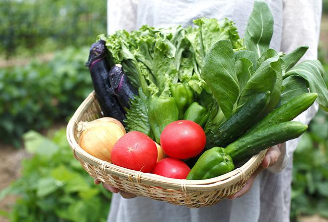 今が旬の夏野菜。食べるほどに綺麗になれて夏バテ知らずに