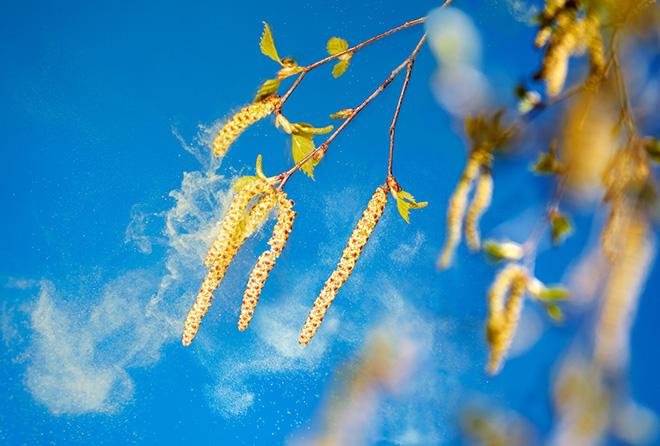 長引く秋の咳は花粉症かも!? どう対応すればいいの?