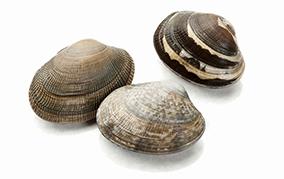 貝類でデトックス