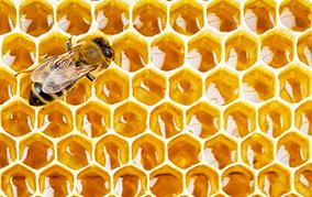 花粉症対策にもオススメ! 天然の抗生物質「プロポリス」の基礎知識